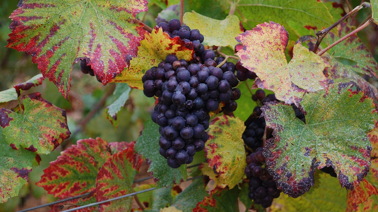 VO_WineryImage_3